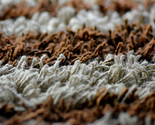 bacterias and carpets